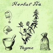 Herbal tea, thyme, mortar and pestle, bag, tea bag. - stock illustration