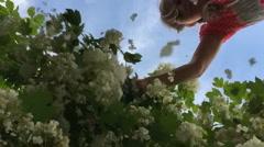 Viburnum flowers fall Stock Footage