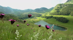 Wildflowers in high mountains wawing at wind Stock Footage