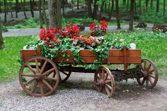 The cart with scarlet red geranium flowers in park - stock photo