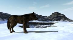 Wolf Standing On Snowy Mountain Range Piirros