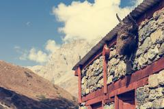 Yak head on a building. Stock Photos