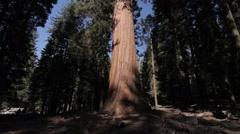Huge Trees In Yosemite Nationalpark, United States Stock Footage