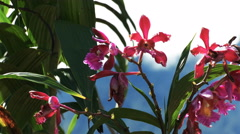 Orchids growing at the ruins at machu picchu Stock Footage