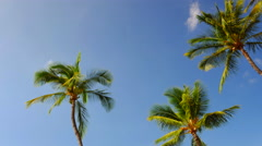 4K 3 Palm Trees in Front of Deep Blue Sky, Looking Up Point of View Stock Footage
