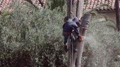 Tree Cutter Chainsaw in Treetop - stock footage