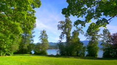 4K Green Lake Side Park, Lush Green Grass and Maple Trees in Spring Stock Footage