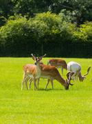 Deer the New Forest England UK - stock photo