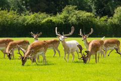 Deer herd new Forest Hamphire England UK Stock Photos