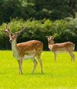 Red deer with antlers New Forest England UK Stock Photos