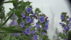 Wild flower in the form of a bell, blue color, Meadow Stock Footage