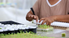 Thai farmer working in hydroponic farm from Hyroponic fastival Stock Footage