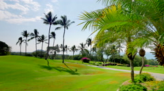 4K Lush Palm Tree Leaves and Palm Trees and Green Golf Course Stock Footage