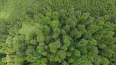 Low flight over the wonderful forest Stock Footage