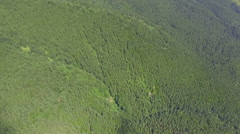 View from the air. beautiful green forest Stock Footage