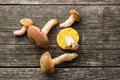 Fresh woodland fungi with boletus mushrooms. Stock Photos