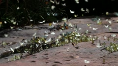 Butterfly at Pang Sida National Park Stock Footage