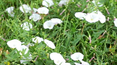 White Flowers In The Garden Stock Footage