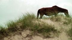 Pan of wild horses on dune Stock Footage