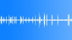 Magpie birds screeching gathering loop Sound Effect
