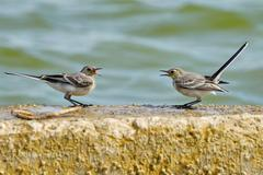Two swallows are negotiating Stock Photos