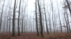 Oak forest at the autumntime, with fog Stock Footage
