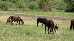 Horse family in the pasture Stock Footage