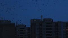 Birds between town apartments Stock Footage
