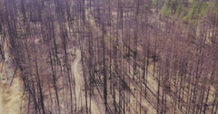 Aerial drone view of Dead trees ravaged by wildfire in california - stock footage