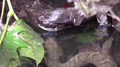 Water snake swims over log Stock Footage