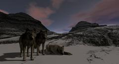 Wolves Standing On Snowy Mountain Range Piirros