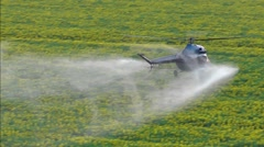 Agricultural works. Helicopter make turn and spraying above sunflowers field Stock Footage