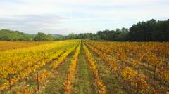 View of beautiful vines in vineyard - stock footage