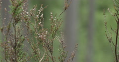 In a summer forest Heather swaying in the wind Stock Footage