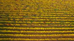 Aerial of beautiful vines in vineyard Stock Footage