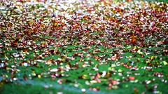 Colored confetti on the ground after celebration event Stock Footage