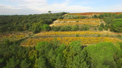 Aerial of beautiful vineyard and landscape - stock footage