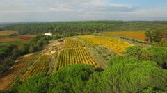 Aerial of beautiful vines in vineyard - stock footage