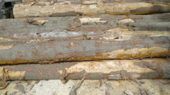 The white spruce logs on the ground Stock Footage