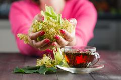Linden tree flowers used for tea from sore throat Stock Photos