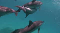 Dolphins mating season. Fascinating underwater diving with the dolphins. - stock footage