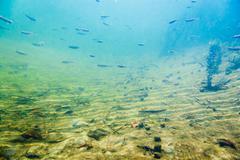 Underwater river landscape with little fish Kuvituskuvat