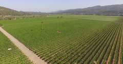 Aerial of Napa Valley vineyards in St Helena with palm trees Stock Footage