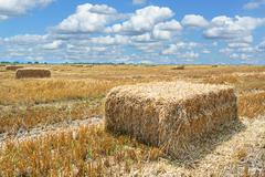 Hay bale in the countryside Stock Photos
