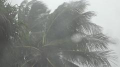 Palm trees, high winds, rain fall in Funafuti, Tuvalu HD Video Stock Footage