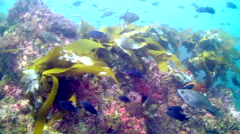 Underwater near Catalina Island Stock Footage