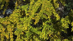 Green vegetation. Background. Flowers, grass and shrubs. Stock Footage