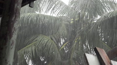 Heavy rainfall, palm trees in Funafuti, Tuvalu HD Video - stock footage