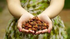 Woman holding a dried rose hips Stock Photos