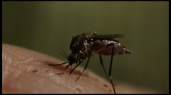 Mosquito Feeding on Human, Time-Lapse Stock Footage